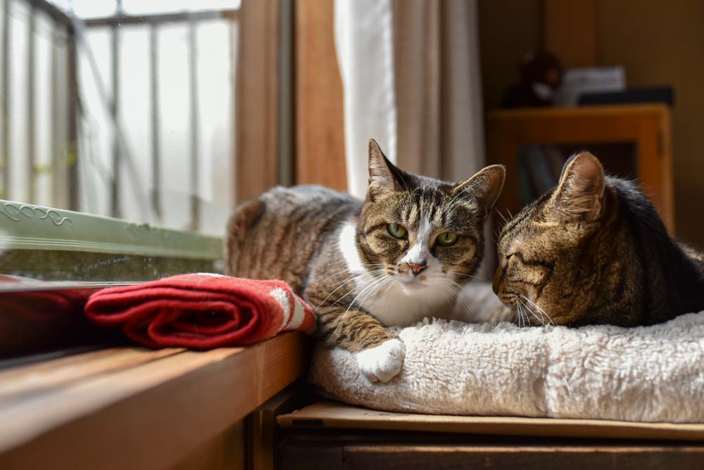 正面を見つめる猫とそれに寄り添う猫