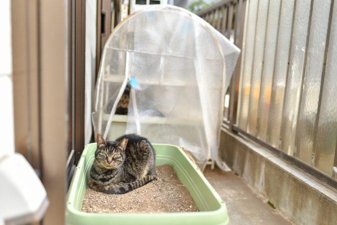 ベランダにいる猫