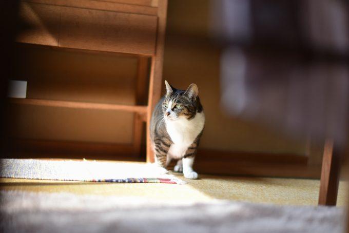 木工作家のサノアイさんの家の猫