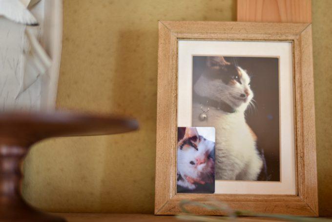 木工作家のサノアイさんの家にある猫の写真