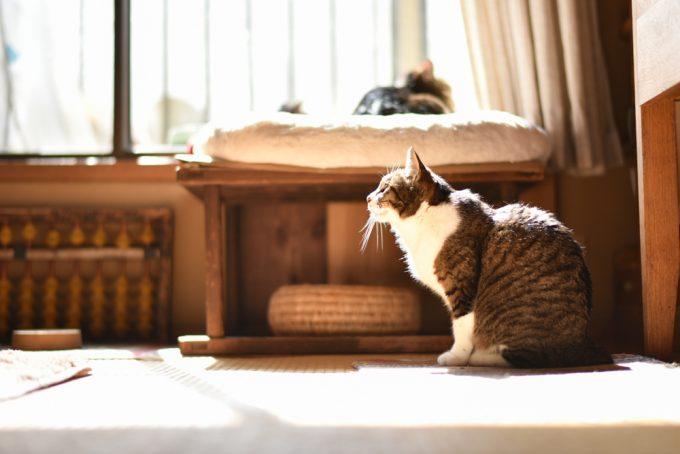 木工作家のサノアイさんの家の2匹の猫
