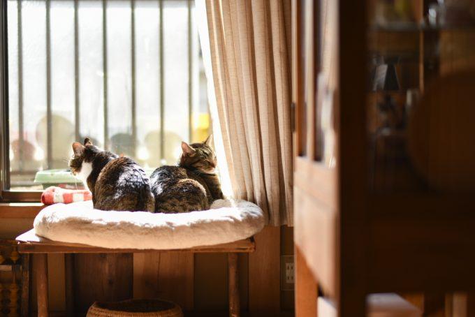 木工作家のサノアイさんの家の2匹の猫が寄り添っている