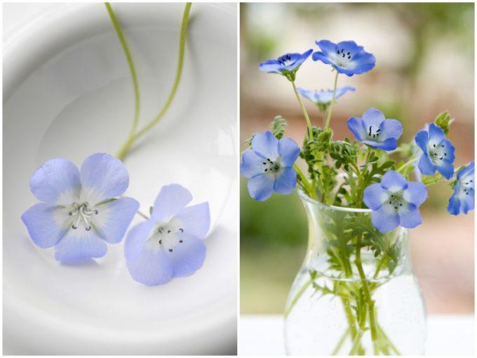 淡いブルーと白の花びらのネモフィラとその花束