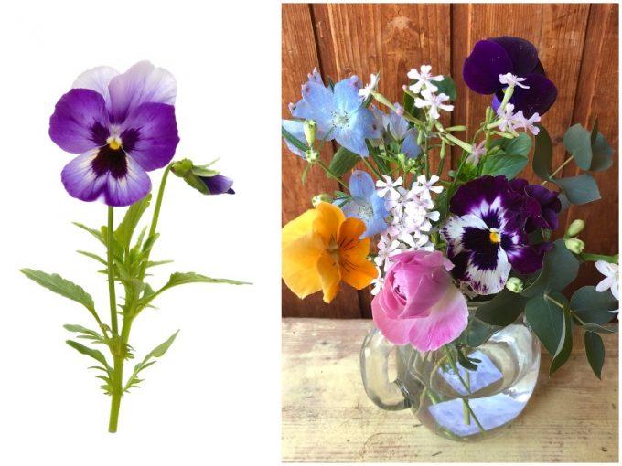 紫のパンジーとカラフルなパンジーの花束