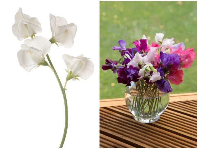 白のスイートピーとカラフルなスイートピーの花束