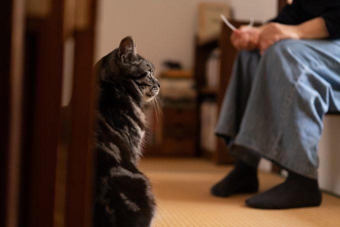 イラストレーター・ユカワアツコさんの愛猫ハチ(オス・5歳)