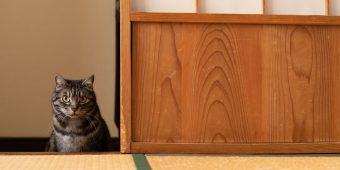 猫が教えてくれること「伝える努力」/イラストレーター・ユカワアツコさんの場合vol.1