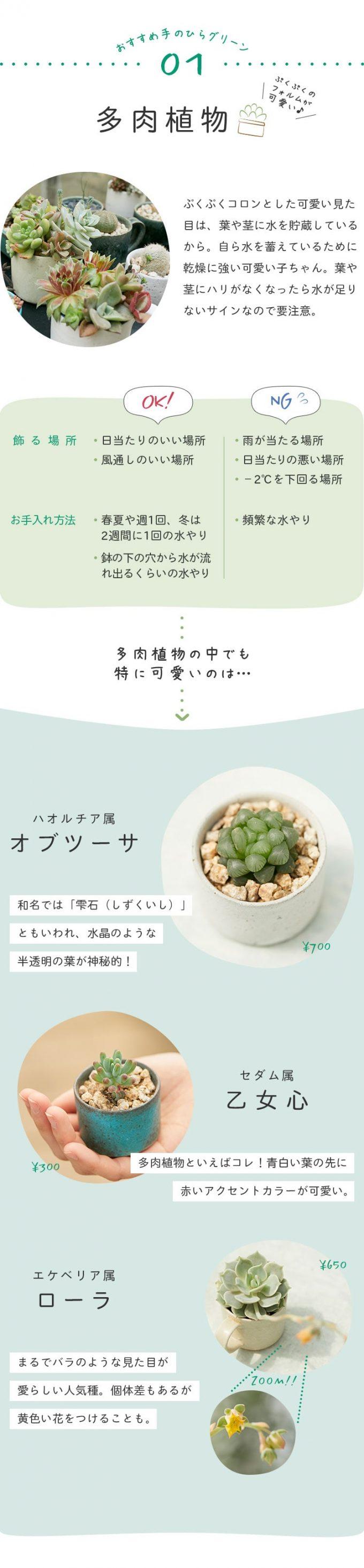 育てやすくて可愛いグリーン01「多肉植物」