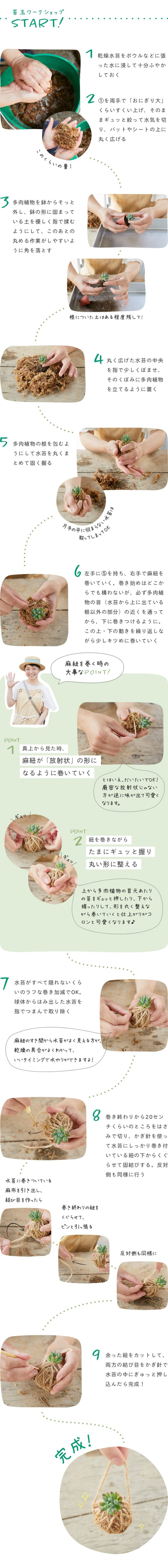 お家で簡単「多肉植物の苔玉」の作り方