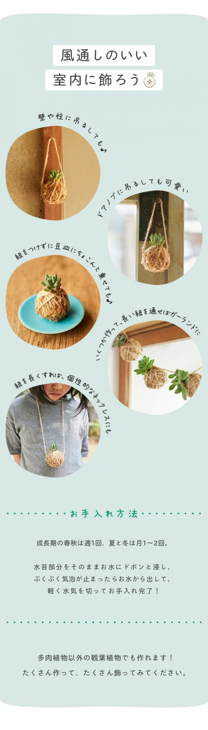 「多肉植物の苔玉」の飾り方アイデア