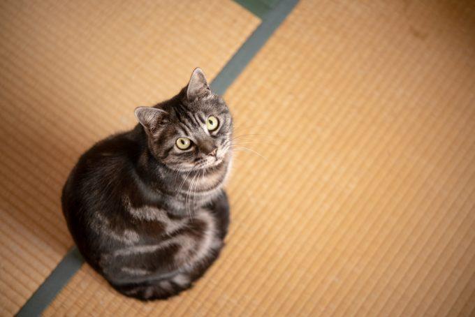 上を見あげるかわいい猫
