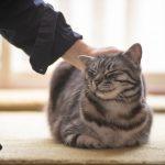 猫が教えてくれること「今を味わう」/イラストレータ...