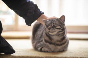 猫が教えてくれること「今を味わう」/イラストレーター・ユカワアツコさんの場合vol.3