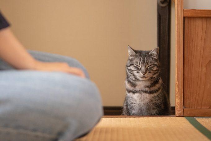 目をつぶるかわいい猫