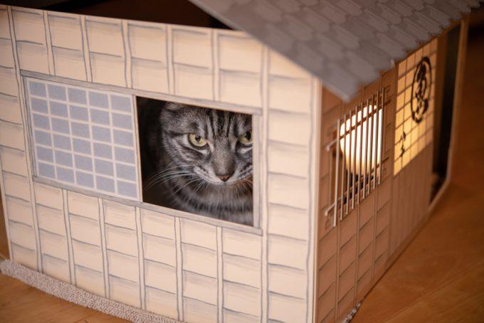 猫ハウスに入ってこちらを見つける猫