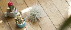 お手入れがラク&インテリアとして素敵。育てやすくて可愛いグリーン<3選>