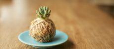 植物をもっと素敵に&もっとオシャレに飾る。「苔玉ワークショップ」