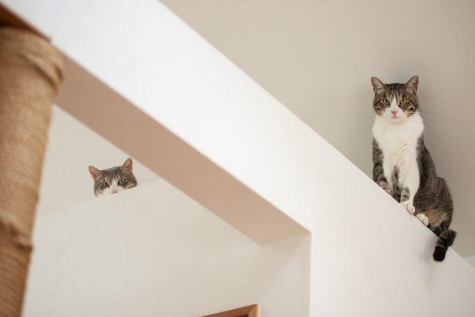 『天然生活』の元編集長・古庄修さんの飼い猫2匹