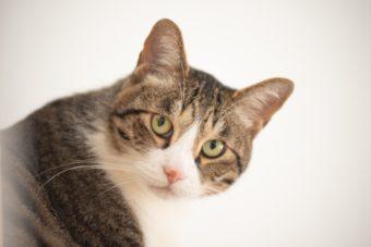 猫が教えてくれること「何もしない事に焦らない」/フリーランス編集者・古庄修さんの場合vol.1