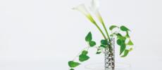 お花をより美しく、長持ちさせる植物のためのジュエリー「PLANT'S JEWEL」
