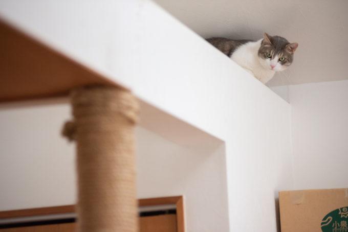 天井の梁の上からこちらを見るかわいい猫