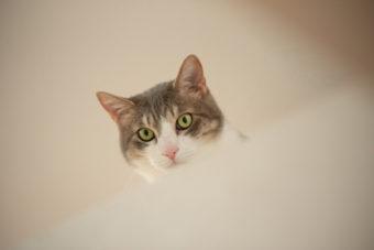 猫が教えてくれること「贅沢な暮らし」/フリーランス編集者・古庄修さんの場合vol.2
