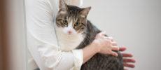 天然生活の元編集長の飼い猫