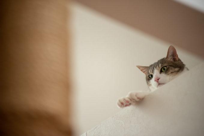 天然生活・元編集長の飼い猫