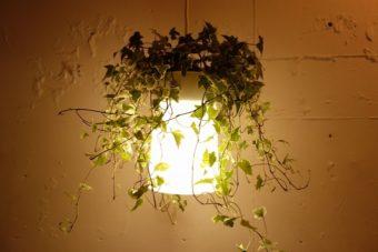植物に囲まれた優しい明かり。プランターがセットになったペンダントライト「Plali」