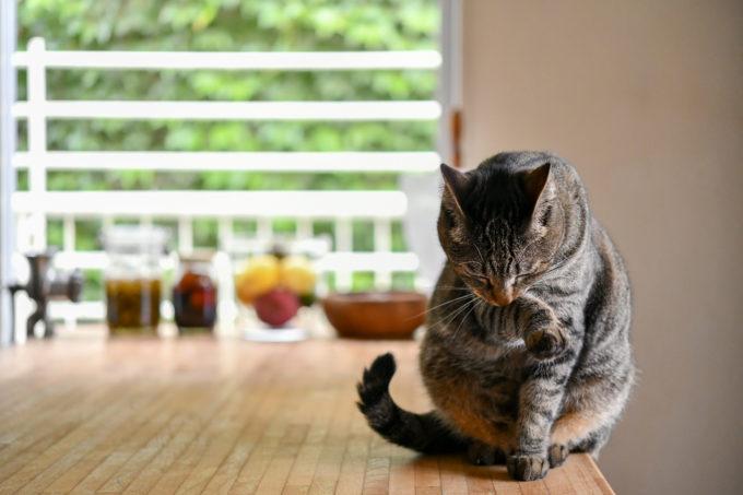 猫のいる生活、料理家の坂田阿希子さんの愛猫が毛づくろいする様子