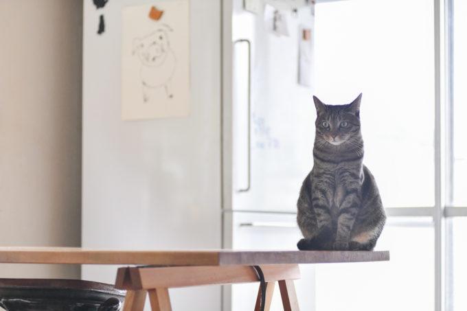 テーブルの上に佇む料理家・坂田阿希子さんの愛猫