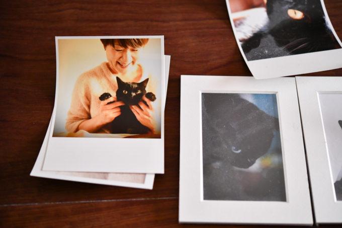 猫のいる生活、料理家の坂田阿希子さんの猫の写真