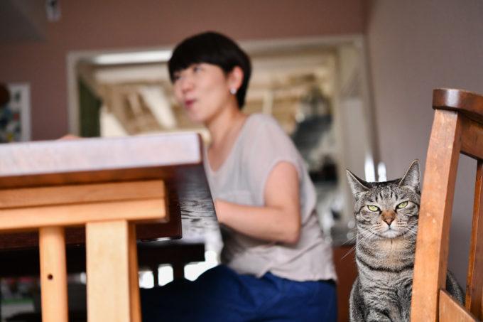 料理家・坂田阿希子さんと愛猫
