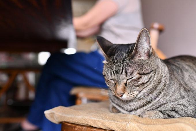 料理家・坂田阿希子さんの愛猫が寝ているところ