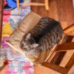 猫が教えてくれること「愛の伝え方」/料理家・坂田阿...