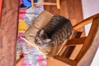 猫が教えてくれること「愛の伝え方」/料理家・坂田阿希子さんの場合vol.2