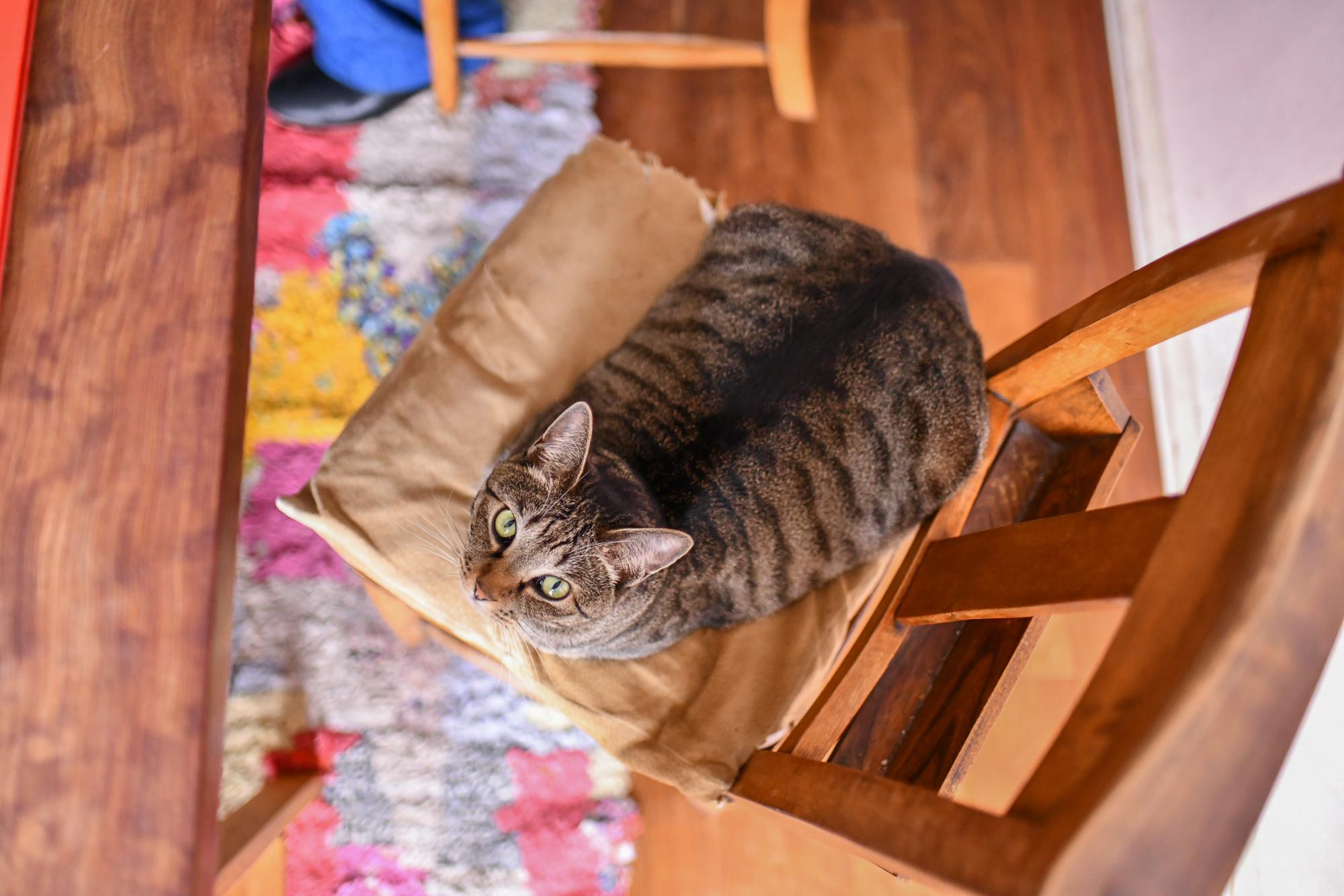 猫のいる生活、料理家の坂田阿希子さんの愛猫