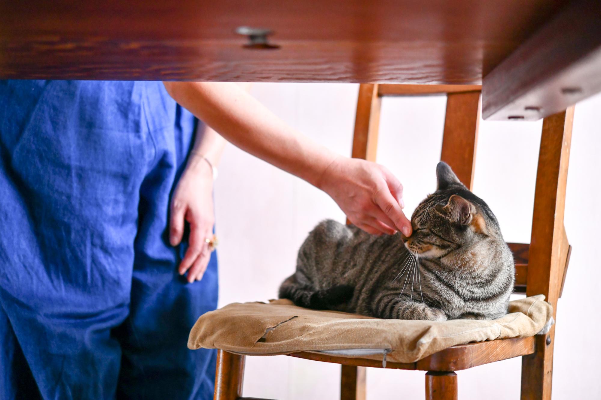 料理家・坂田阿希子さんの愛猫が椅子の上でくつろぐ様子
