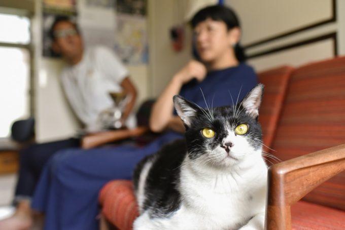 西荻窪のショップ&ギャラリー「ウレシカ」の飼い猫2