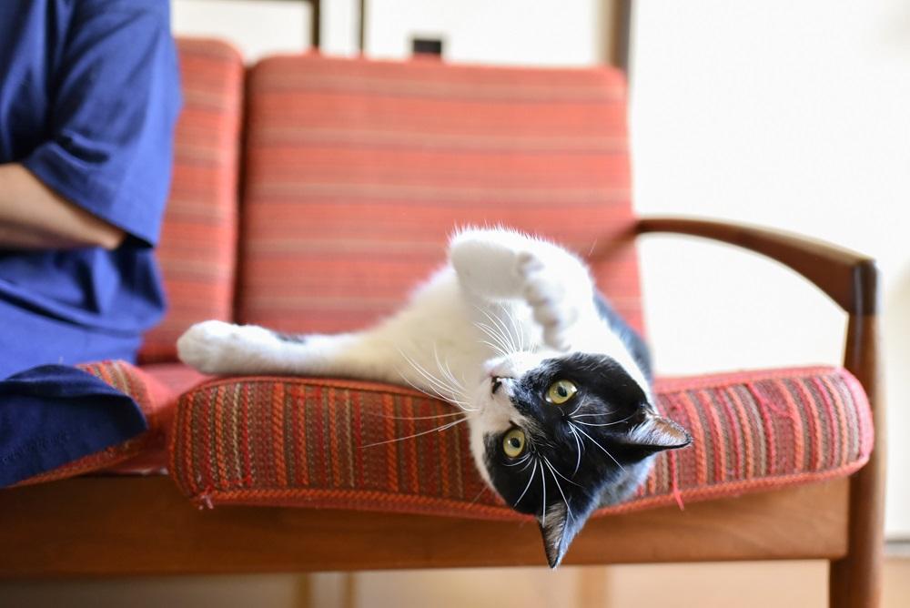 西荻窪のショップ&ギャラリー「ウレシカ」の飼い猫