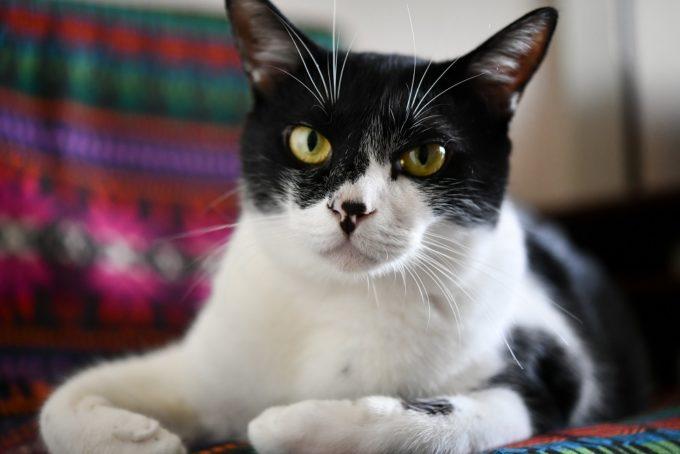 西荻窪のショップ&ギャラリー「ウレシカ」の飼い猫3