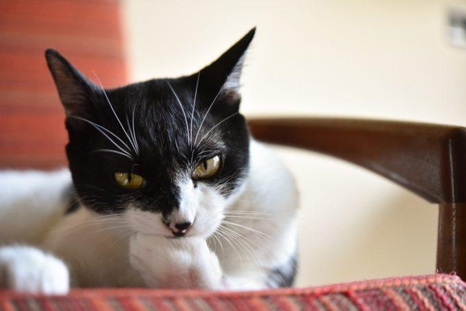 西荻窪のショップ&ギャラリー「ウレシカ」の飼い猫5