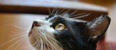 西荻窪にあるウレシカの飼い猫びんすけ