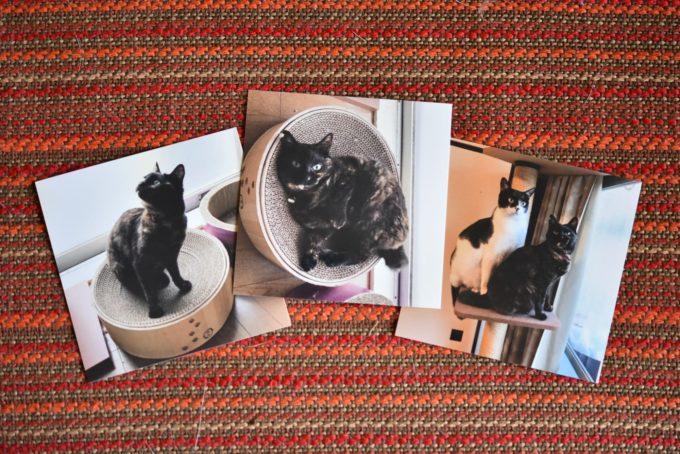 飼い猫のたくさんの写真