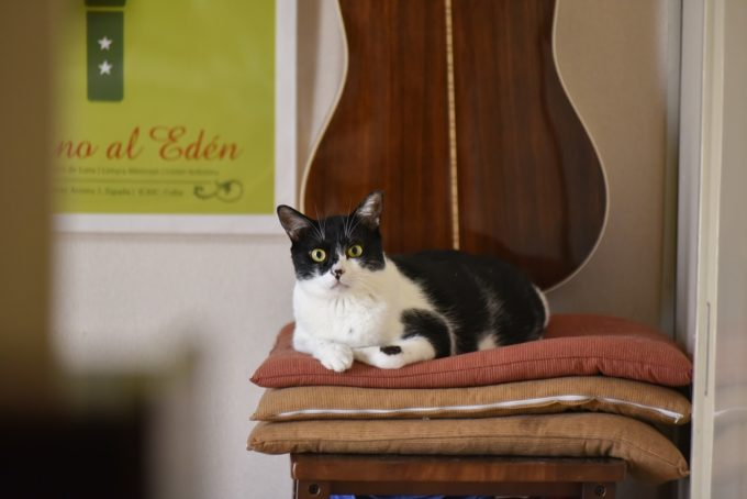 西荻窪のショップ&ギャラリー「ウレシカ」の飼い猫4