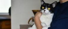 西荻窪にあるショップ&ギャラリー「ウレシカ」の飼い猫びんすけ