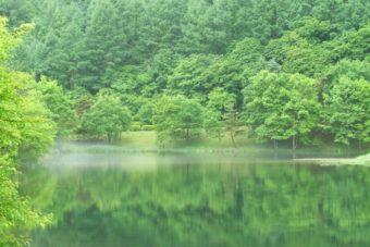 美しい森に抱かれる。この秋おすすめの長野・蓼科1泊2日ショートトリップ