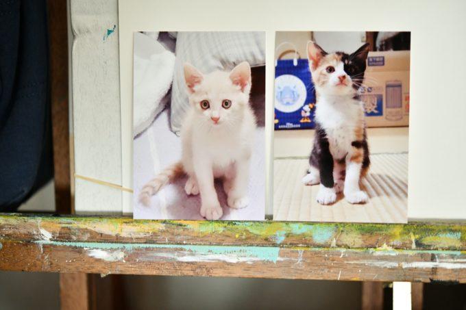 絵本作家・松田奈那子さんの飼っている子猫たちの写真