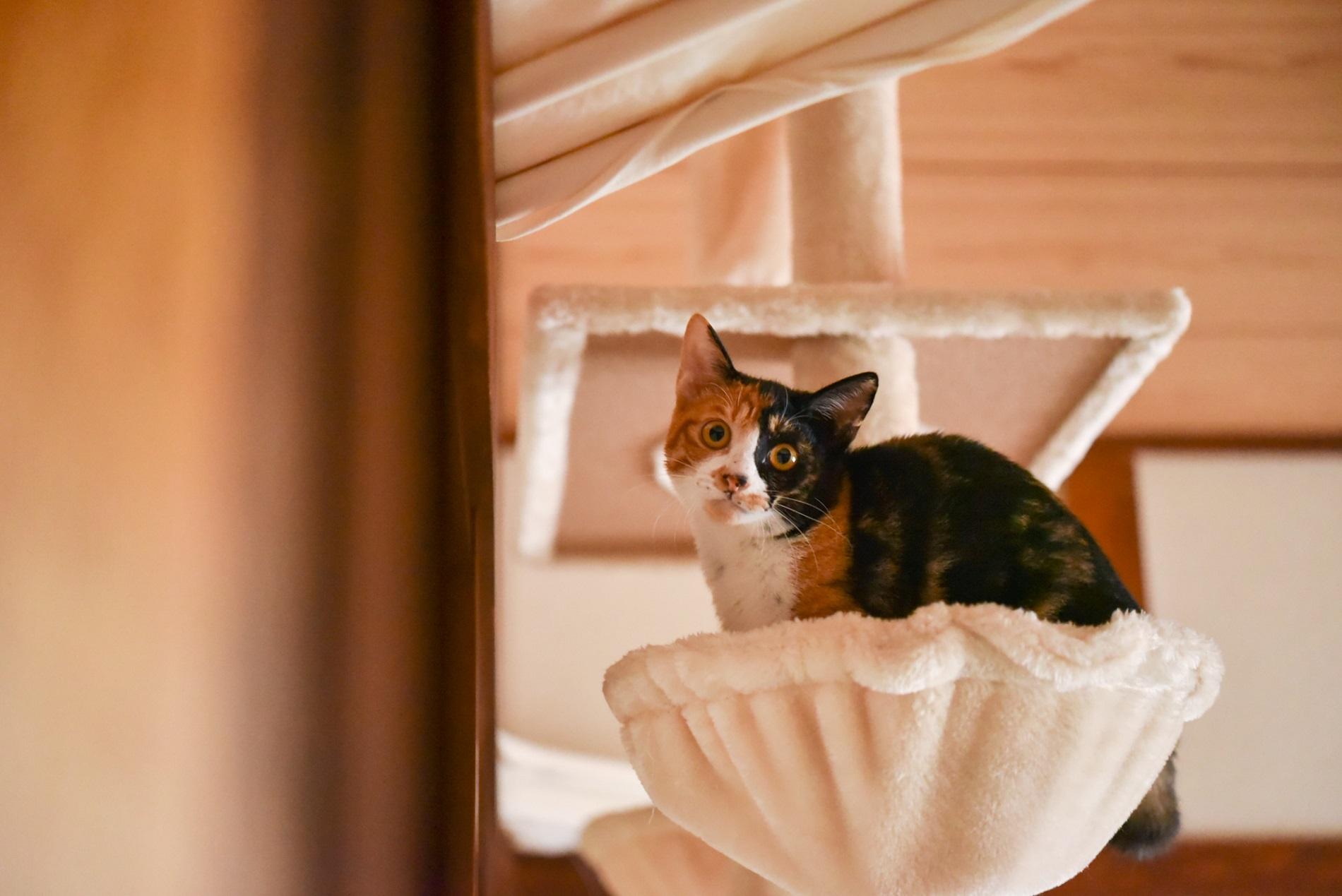 絵本作家・松田奈那子さんの飼っている子猫の三毛猫