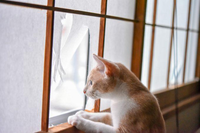 絵本作家・松田奈那子さんの飼っている茶トラの子猫